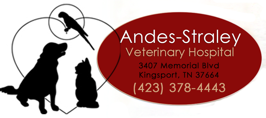 Veterinarian in Kingsport, TN