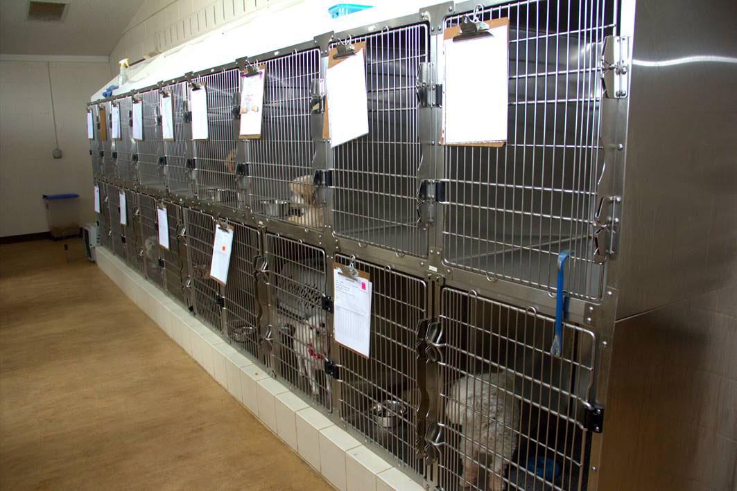 Pet Boarding in Kingsport, TN