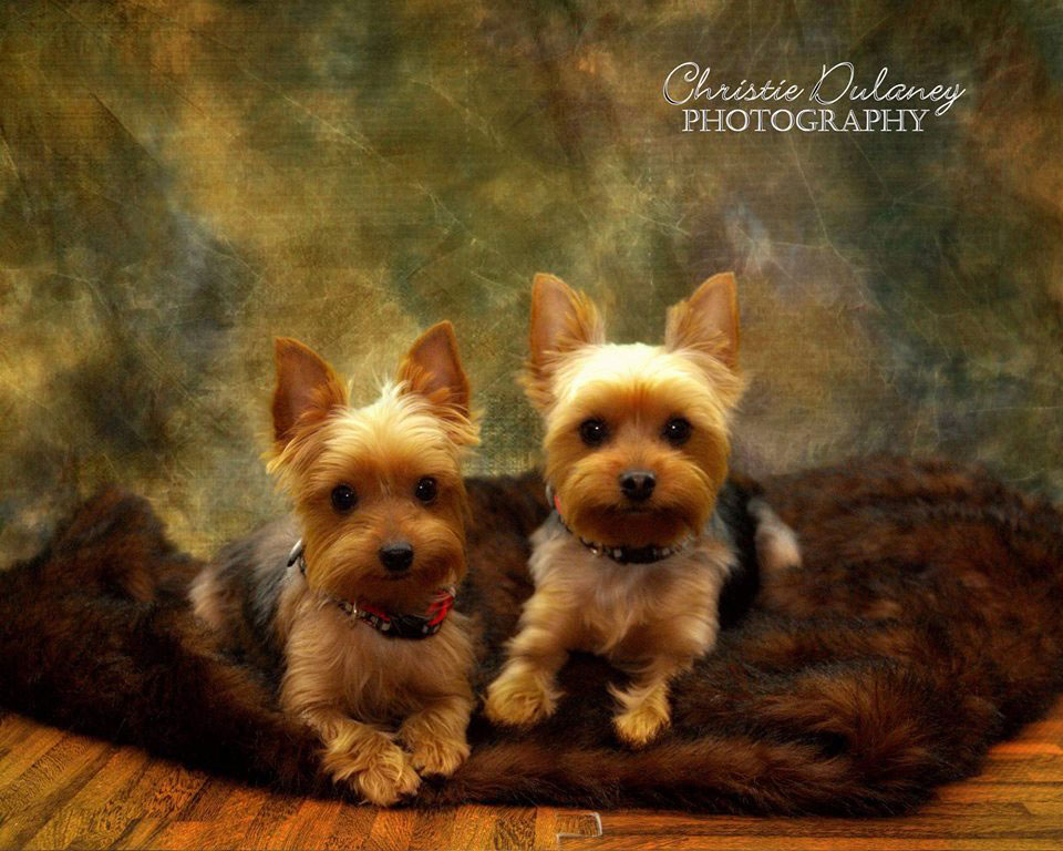 Pet Photography in Kingsport, TN