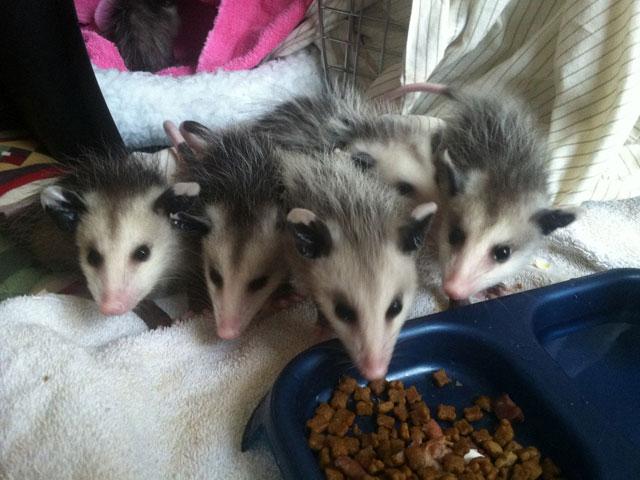 Wildlife Rehabilitation in Kingsport, TN